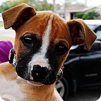 Adopt A Pet :: WIlma - Orlando, FL