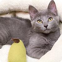 Adopt A Pet :: Jambalaya - Chicago, IL