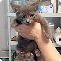 Adopt A Pet :: Smokey - Lawrenceville, GA