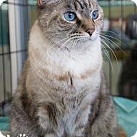 Adopt A Pet :: Nepal - Merrifield, VA
