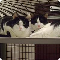 Adopt A Pet :: Minnie - Muscatine, IA
