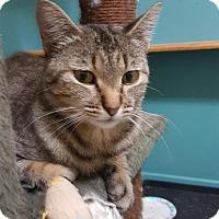 Adopt A Pet :: Tigra - Winchester, CA