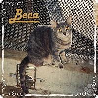 Adopt A Pet :: Beca - Converse, TX