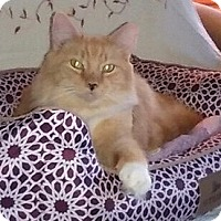 Adopt A Pet :: Buddy - Adoption Pending - Horsham, PA