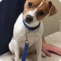 Adopt A Pet :: Precious in San Antonio - San Antonio, TX