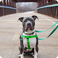 Adopt A Pet :: Happy - Villa Park, IL