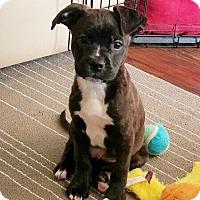 Adopt A Pet :: Freddie - Courtland, AL