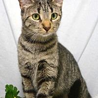 Adopt A Pet :: Pandora - St. Cloud, FL
