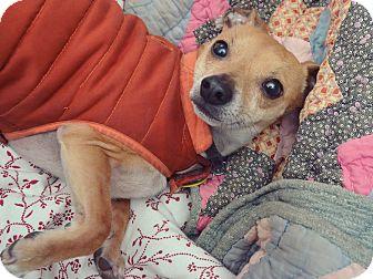 Dachshund/Chihuahua Mix Dog for adoption in Decatur, Georgia - Artemis