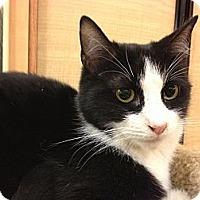 Adopt A Pet :: Checkers - Monroe, GA