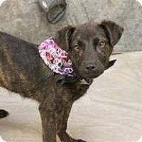 Adopt A Pet :: Bobby - South Jersey, NJ
