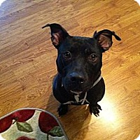 Adopt A Pet :: Riggs - Hillsborough, NJ