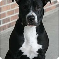 Adopt A Pet :: Pepper - Rochester, NY