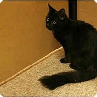 Adopt A Pet :: Fluffy - Orlando, FL