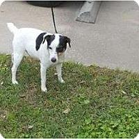 Adopt A Pet :: Santiago in Houston - Houston, TX