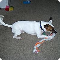 Adopt A Pet :: Sammy - Williston, FL