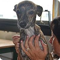 Adopt A Pet :: Marisol- In CT - West Hartford, CT