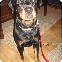 Adopt A Pet :: Sassie - Seattle, WA
