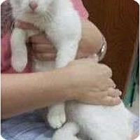 Adopt A Pet :: Cupcake - Reston, VA