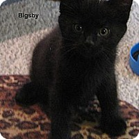 Adopt A Pet :: Bigsby - Portland, OR