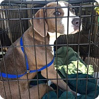 Adopt A Pet :: Baby - Ormond Beach, FL