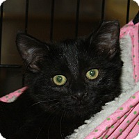 Adopt A Pet :: Fern - North Branford, CT