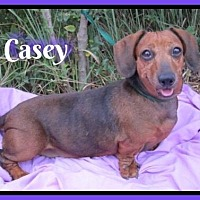 Adopt A Pet :: Casey - Green Cove Springs, FL