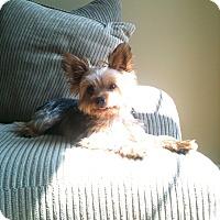 Adopt A Pet :: Jack - Suwanee, GA