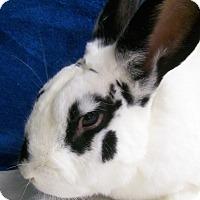 Adopt A Pet :: Casey - Harrisburg, PA