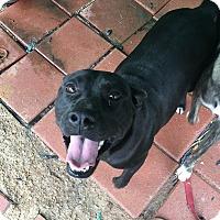 Adopt A Pet :: Carter - Jacksonville, TX