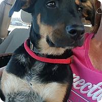 Adopt A Pet :: Buster Brown - Glastonbury, CT