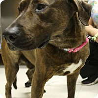 Adopt A Pet :: Pup - Bowie, MD