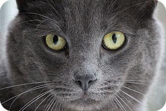 Domestic Shorthair Cat for adoption in Colorado Springs, Colorado - Xeric