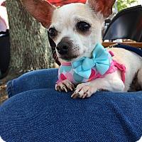 Adopt A Pet :: Kathy - Durham, NC