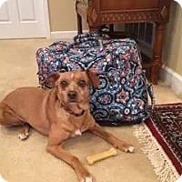 Adopt A Pet :: Winchester - New Kensington, PA