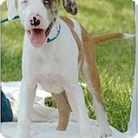 Adopt A Pet :: Gabriel - Madison, WI