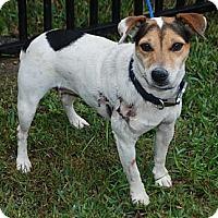 Adopt A Pet :: Danity in Houston - Houston, TX