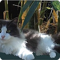 Adopt A Pet :: Emily - Naples, FL