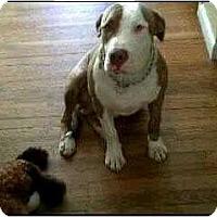 Adopt A Pet :: OS surrender - courtesy post - Cincinnati, OH