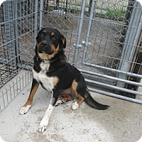 Adopt A Pet :: CHARLOTTE - Cornwall, ON