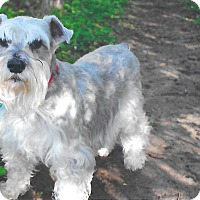 Adopt A Pet :: Charlie - Sharonville, OH