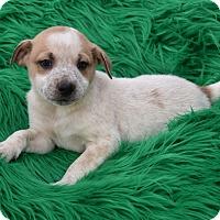 Adopt A Pet :: Brooks - Groton, MA