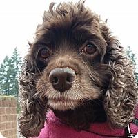 Adopt A Pet :: Lili - Santa Barbara, CA