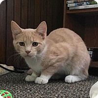 Adopt A Pet :: Joey - Norwich, NY