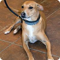 Adopt A Pet :: Bella - Patterson, CA