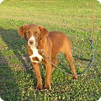Adopt A Pet :: TEAGAN - Bedminster, NJ