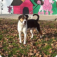 Adopt A Pet :: Jetson - Paris, IL