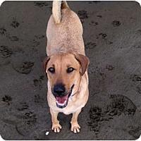 Adopt A Pet :: Indy - Concord, CA