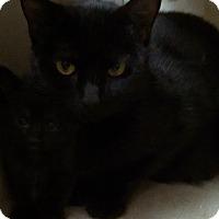 Adopt A Pet :: Nana - Willington, CT