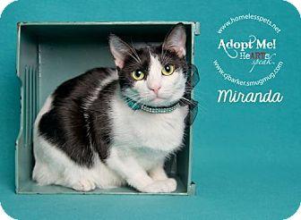 Domestic Shorthair Cat for adoption in Houston, Texas - Miranda Lambert